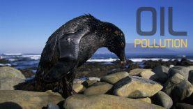 Oil-pollution